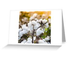 Cotton Field 4 Greeting Card