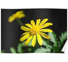 Simple Yellow Flowers Poster