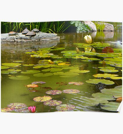 Lilly Pond in Golden Gate Park Poster