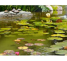 Lilly Pond in Golden Gate Park Photographic Print