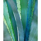 Agave Closeup 002 by Tim McGuire