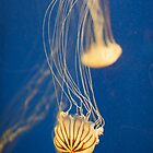 jelly fish at atlanta aquarium by harryvw