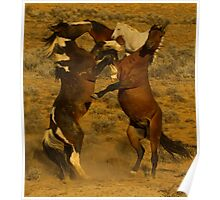 Fighting Wild Horses-Signed-2726 Poster