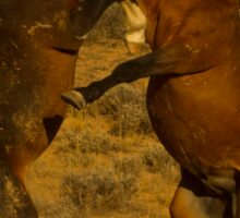 Fighting Wild Horses-Signed-2726 Sticker