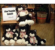 Five Charming Tuxedo Stuffed Cats For Sale! Photographic Print