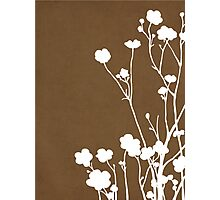 Buttercups in Brown & White Photographic Print