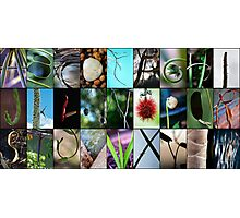 Nature's Alphabet Photographic Print
