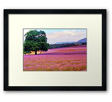A Field of Lavender Framed Print