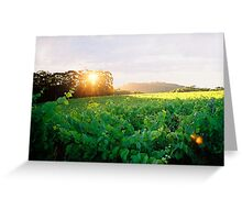 """Vineyard Sunset"" Greeting Card"