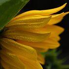 Sunshine & Rain Drops by Creative Minds