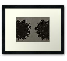 Queen Anne's Lace in Gray Framed Print