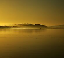 mist morn. victoria, australia by tim buckley | bodhiimages