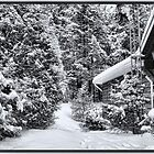 A Snowy Path in the Forest - A Secluded Country Cabin in the Woods after a Canadian Blizzard by Chantal PhotoPix