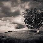 Tree on the Hill by Andrew Wilson