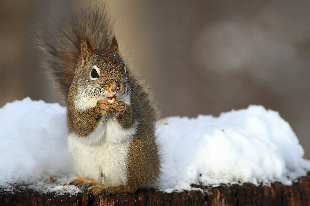 """""""How did you know I love peanuts?"""" by Alinka"""