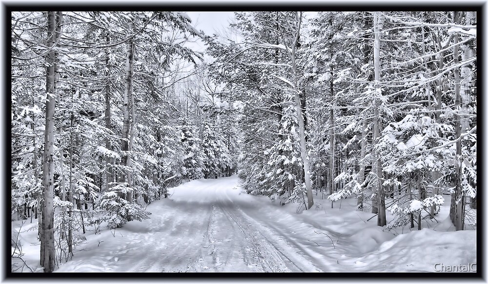 Winter Wonderland ~ A Snow-covered Forest Road in a Wintry Landscape after a Snow Storm by Chantal PhotoPix