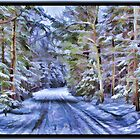 A Fairy Tale Forest with Snowy Evergreen Trees in the Cold Canadian Wilderness by Chantal PhotoPix