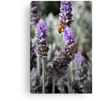 Busy Bee Collecting Pollen Canvas Print