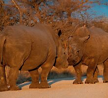Rhino faceoff, Kruger National Park, South Africa by Erik Schlogl