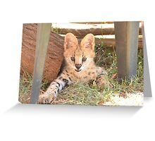 Michael the Serval Greeting Card