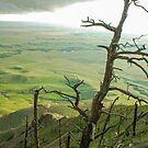 Stormy Tree by Mary Carol Story