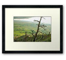 Stormy Tree Framed Print