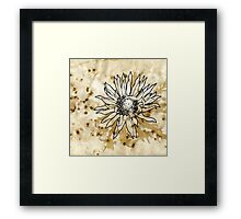 Carlina Acaulis Framed Print