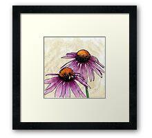 Echinacea 2 Framed Print