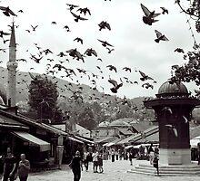 Pigeons, Sarajevo. by Alex Maciag