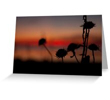Cove Sunrise pt4 Greeting Card