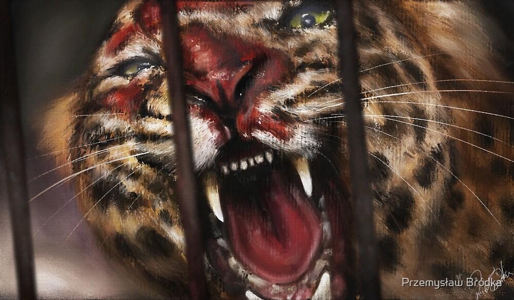 Rage in a Cage by Przemysław Bródka