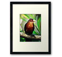 Tropical Bird Framed Print