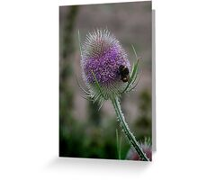 White-tailed Bumblbee on teasel Greeting Card