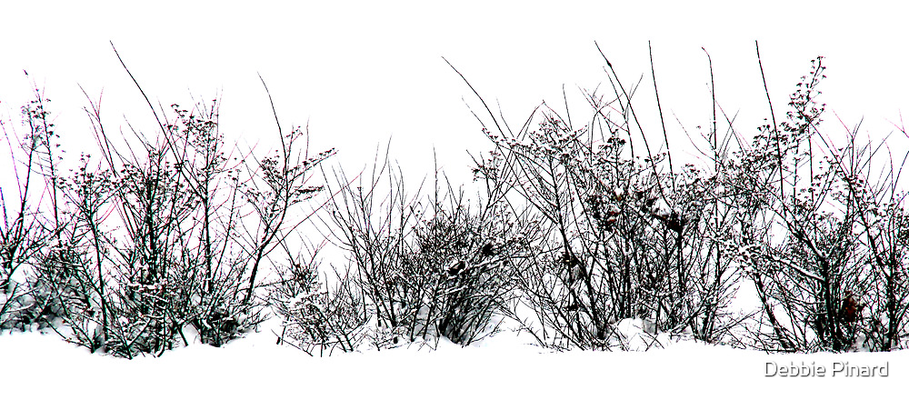 Bushes in the Snow by Debbie Pinard