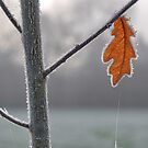 The Last Leaf. by relayer51