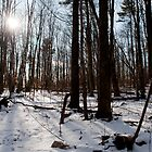 Sun on the Wild Turkey Trail by Gary Chapple