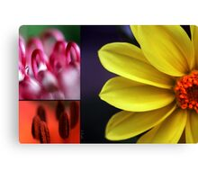 Flower palet Canvas Print