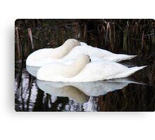 sleeping swans Canvas Print