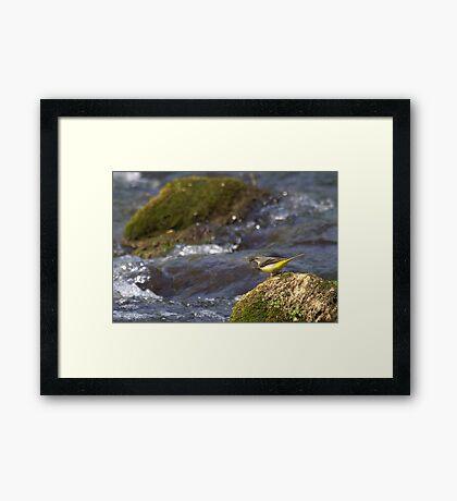 The Fly Fishing Master Framed Print