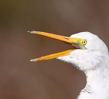Egret Squawk by naturalnomad