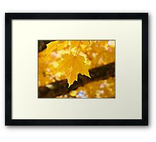 Yellow Autumn Leaf art prints Fall Leaves Framed Print