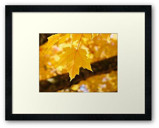Yellow Autumn Leaf art prints Fall Leaves by BasleeArtPrints