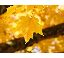 Yellow Autumn Leaf art prints Fall Leaves Photographic Print