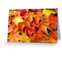 Fall Tree Leaves art prints Colorful Autumn Greeting Card