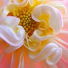 Dahlia Floral art prints Pink White Dahlias by BasleeArtPrints