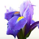 Flower by Steve Small