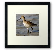 Avian Profile ~ Part Eight Framed Print