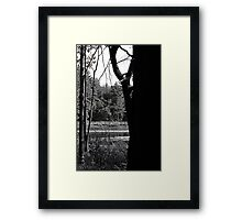 Walk of the day Framed Print