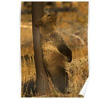 Grizzly Cub - Snow -Signed-5164 Poster