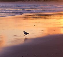 'The Local', Soldiers Beach, NSW by Donna Jones